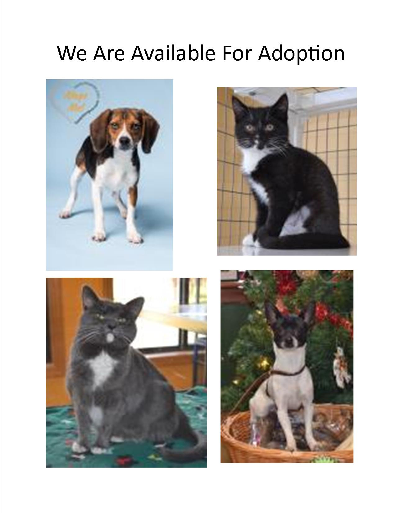 Fauquier SPCA – e And Meet Someone Who Loves You